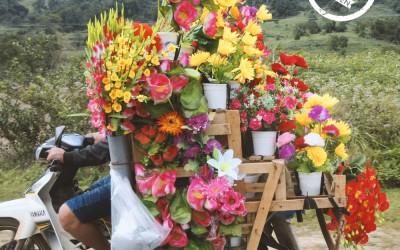 Blumen aus Vietnam