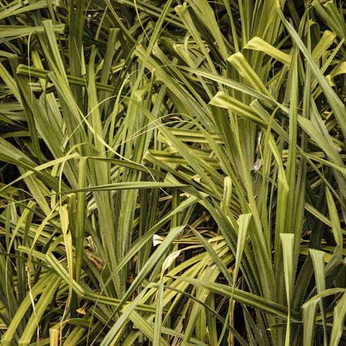 pflanzen Sihanoukville City