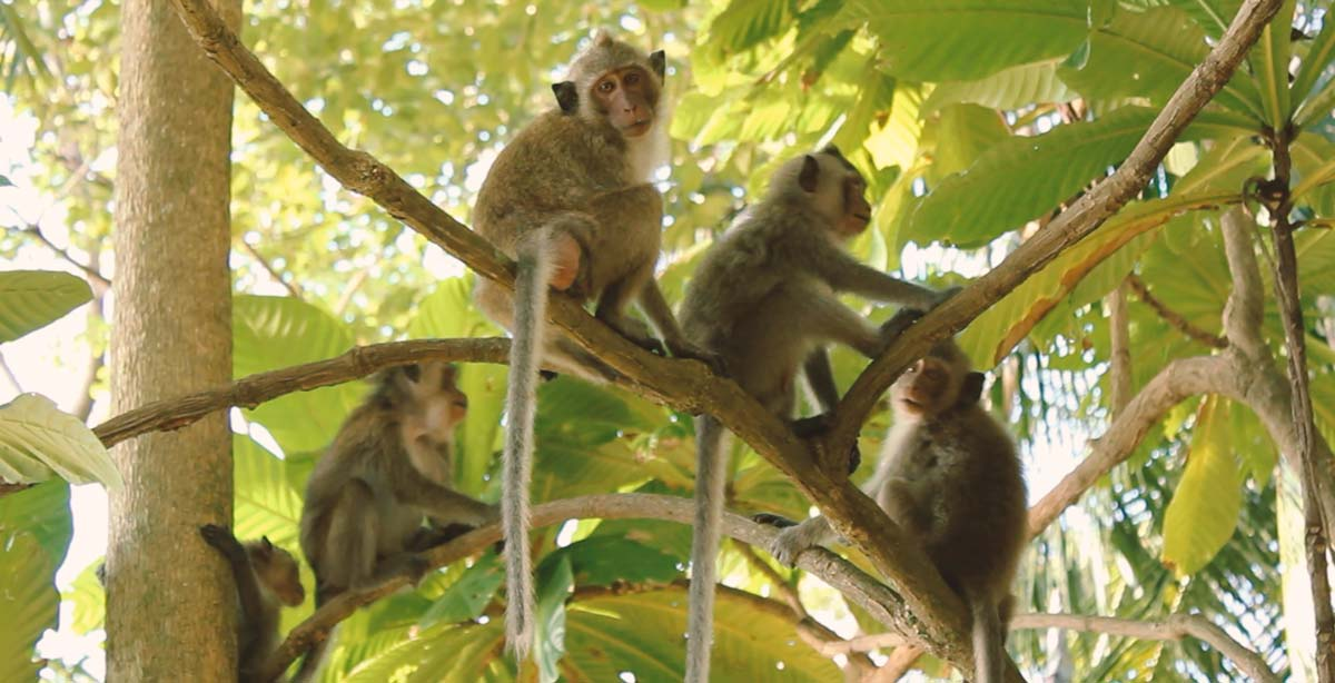 koh-chang-bungalow-monkeys