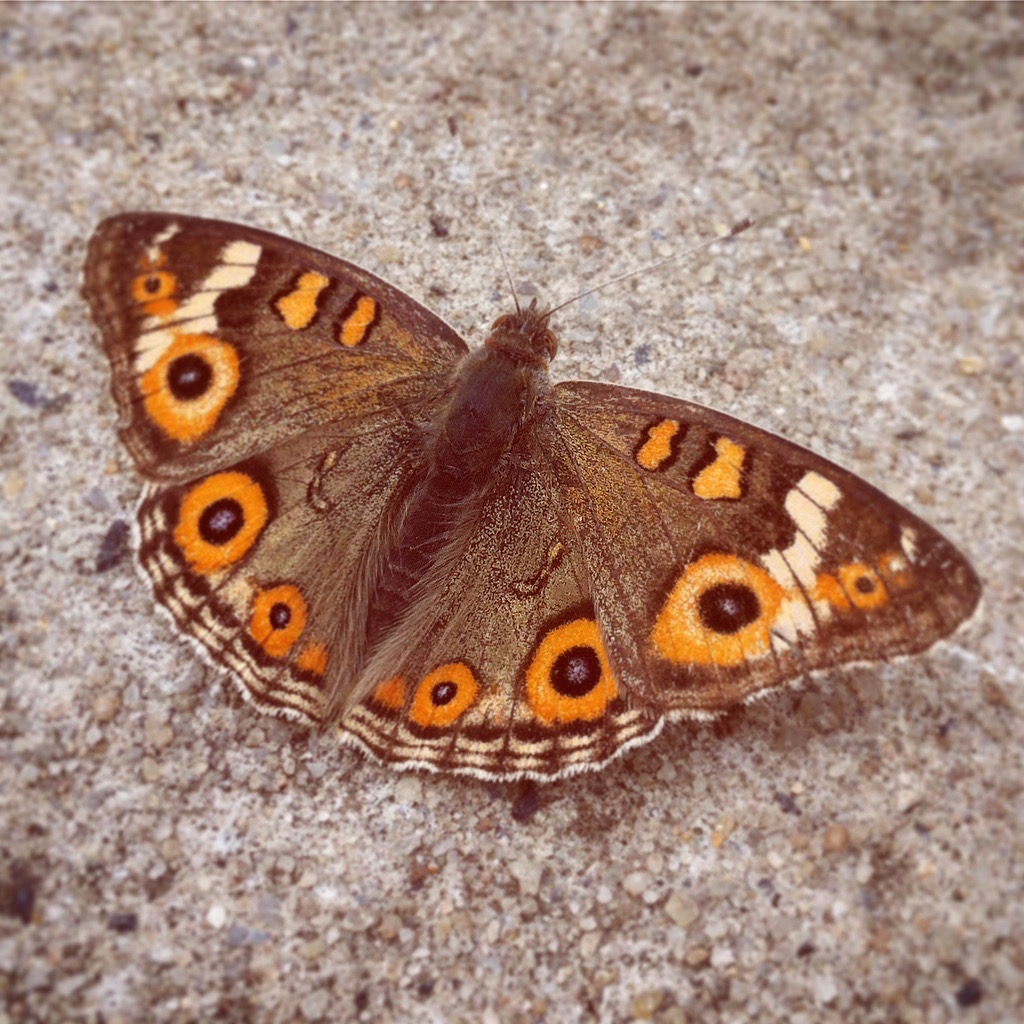 work-and-travel-australien-erfahrungen-schmetterling